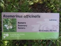 Rosmarinus officinalis_01
