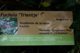 Fuchsia trientje (11)