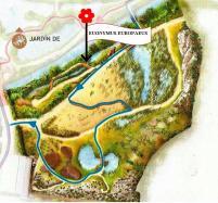 Euonymus europaeus Plano