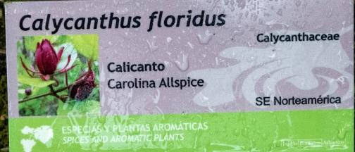 Calycanthus floridus 0 (cartela)