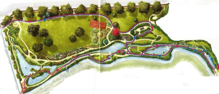 001-Jardin de la La Isla - Hydrangea paniculata
