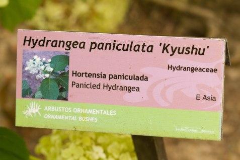 002-Hortensia 1-