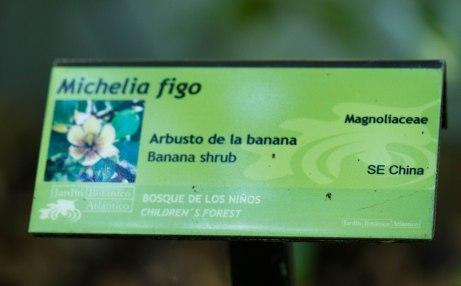 002-Michelia 1-